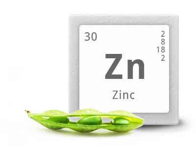 Zinc : mineral para deportistas