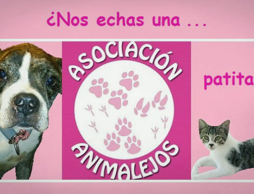 Recogida de alimentos y material en Top Nutrition para la Asociación Animalejos